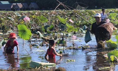 Cả trăm người ngâm mình dưới hồ giữa trưa bắt cá